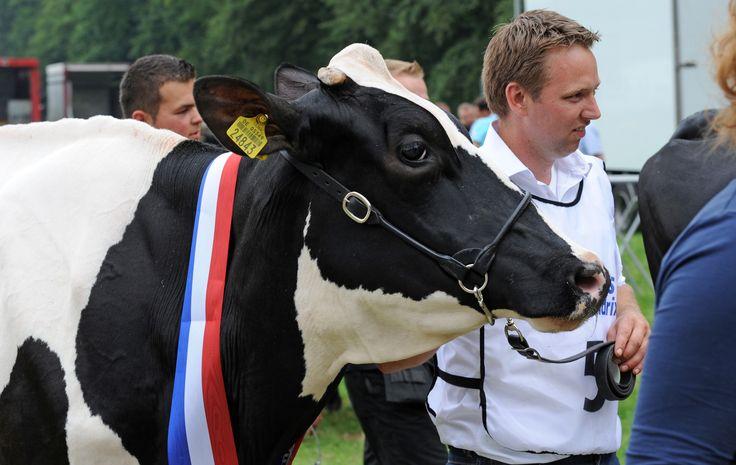 Winnares dairyfair 2013