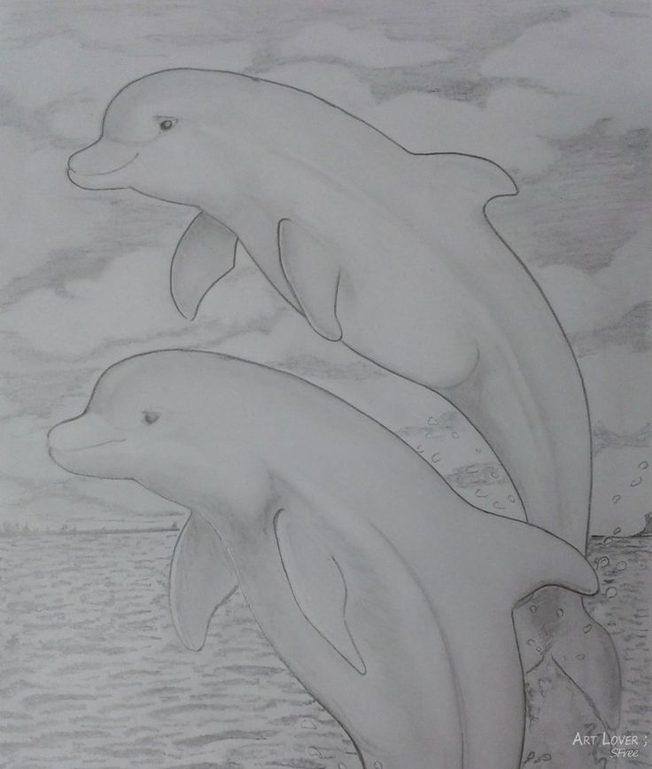 Dolphin Drawing 2015 Graphite Pencil by ArtLover1980 on DeviantArt