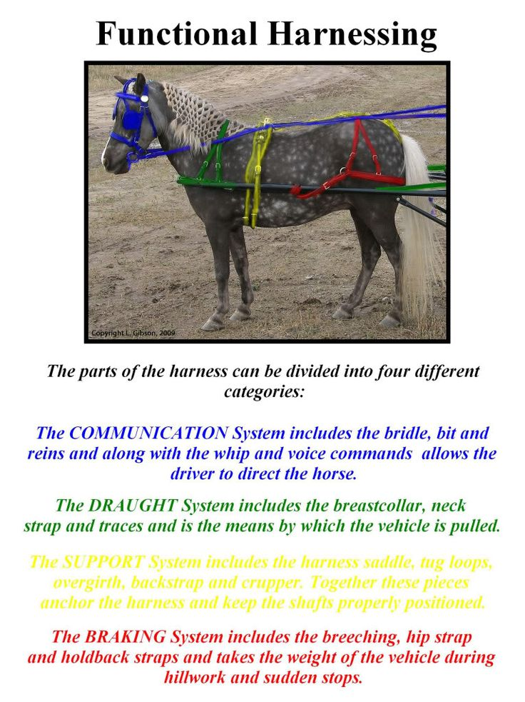 How do you harness a miniature horse? Description from miniaturehorsetalk.com. I…