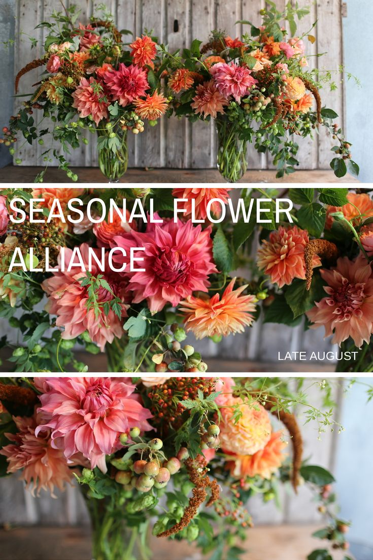 Created in late August, these seasonal bouquets grown and designed by Floret Flower Farm include  crabapples, dinner plate and regular dahlias, rose hips, amaranth, raspberry greens and love in a puff vine. #farmerflorist