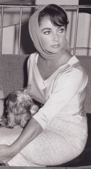 Elizabeth Taylor looking very chic. Key Glamour point -  accessorise with head scarf and carry small dog