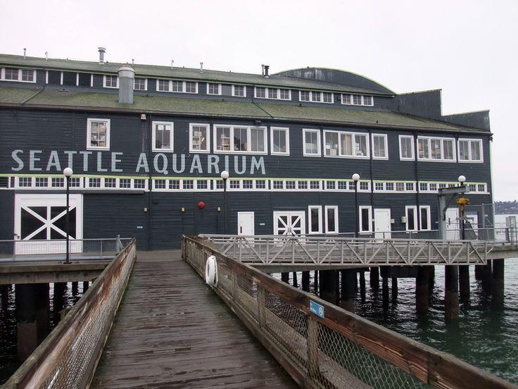 Seattle Aquarium. Seattle, Washington.. july 2013 @rileerasmussen  @bransonrasmussen