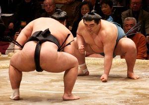 Qu'est-ce que le sumo ?