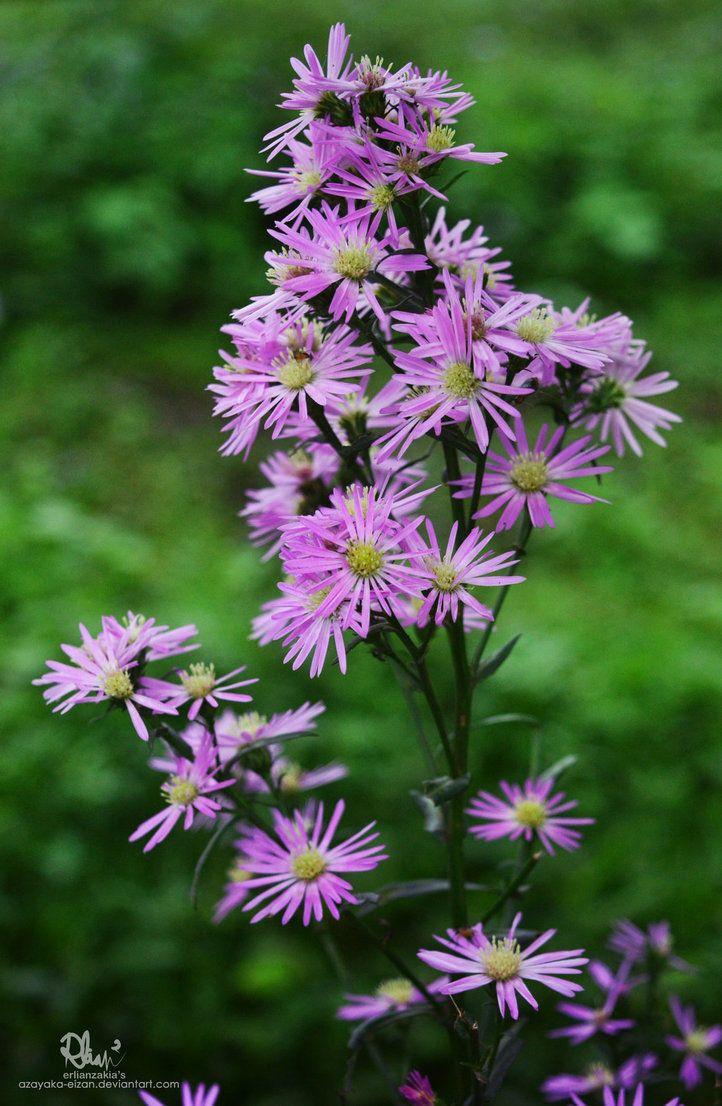 Bunch of Flowers by azayaka-eizan.deviantart.com on @DeviantArt