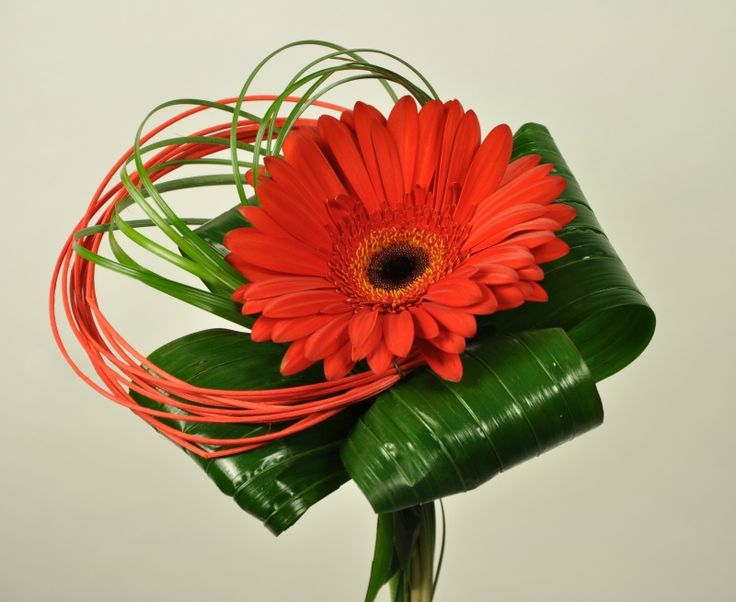 Malá gerbera | Prodej a rozvoz květin v Praze