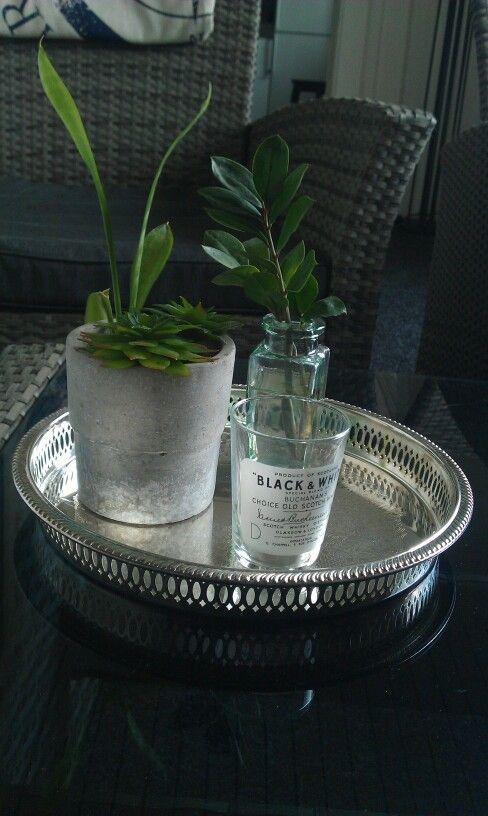 #diy #succulent #green #homedecor #suckulenter #plantering #indoor #indoorgarden #inomhus #inredning