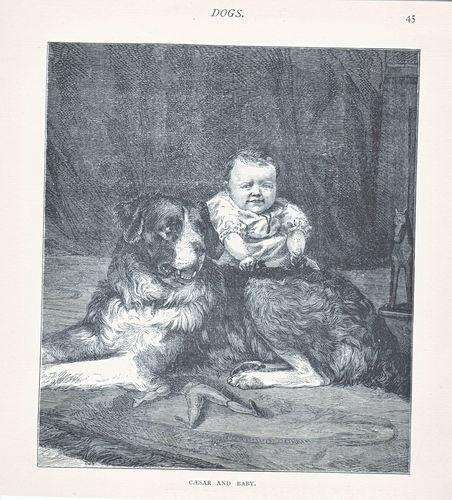 Early Newfoundland Dog with Baby Boy Antique Print 1886 | eBay