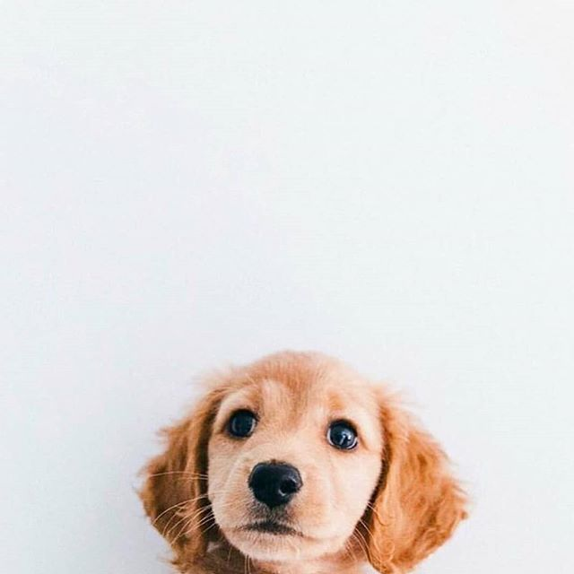 Today Were Kicking Off Tuesday With Some Puppy Spam Your Turn