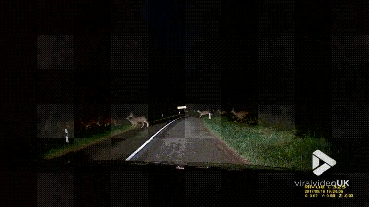 Deer Crossing signs are a good idea http://ift.tt/2y4sRN2
