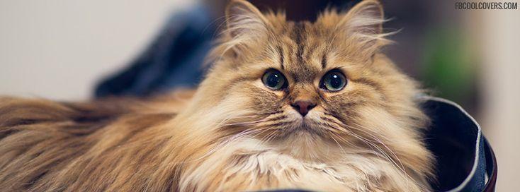 #SmileToMe #NaMo4India #KnowTheTruth Angry Pussy Cat ...