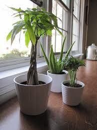 Image Result For Living Room Plants