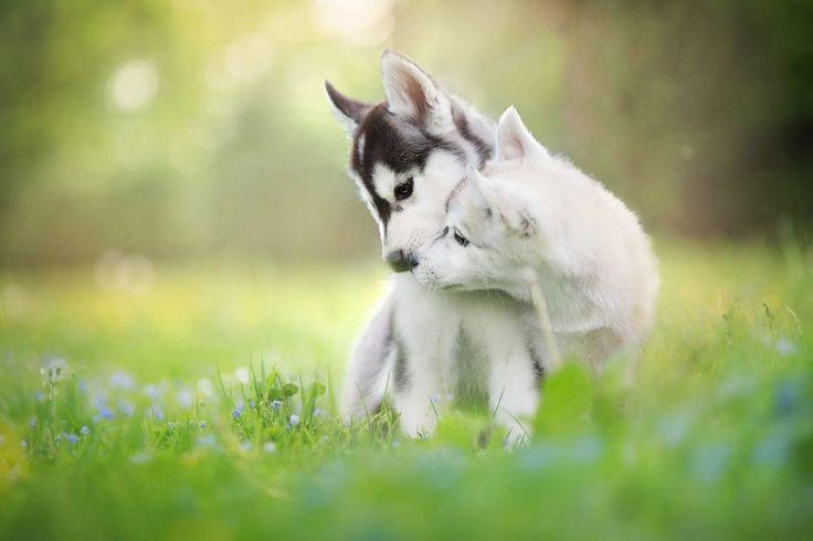 Brindo por esas personas que provocan que nazcan flores en mis labios ---------------------- Bon dia! Buenos días! Good Morning! Imaginaos qué tipo de besos se pueden regalar con ellos ---------------------- Fot.: ILyson #primavera #spring #animales #animals #perros #dogs #luz #light #besos #kisses #amor #love #verde #green #amigos #friends #dulce #sweet