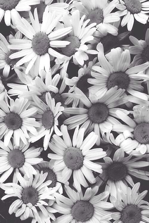 Iphone Wallpaper Black And White Mono Sunflower