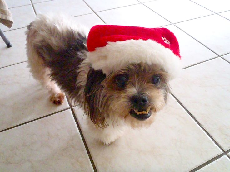 Ho ho ho.....from Maxi Dog! :)