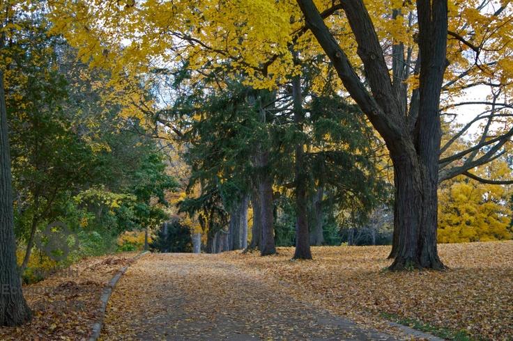Fall Path    www.facebook.com/vasphotoca