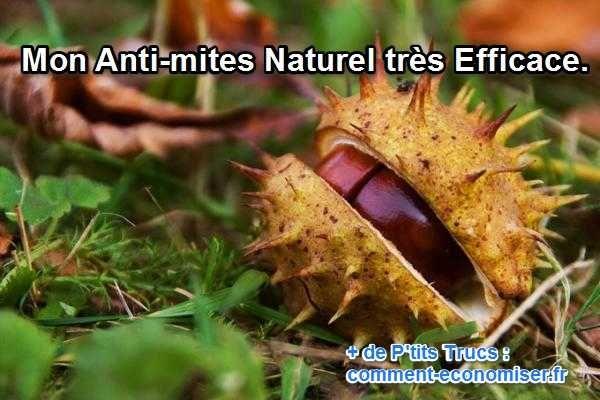 anti-mites naturel le marron du marronier à essayer aussi pour les araignées