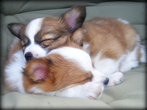 Sleeping dogs on the sofa