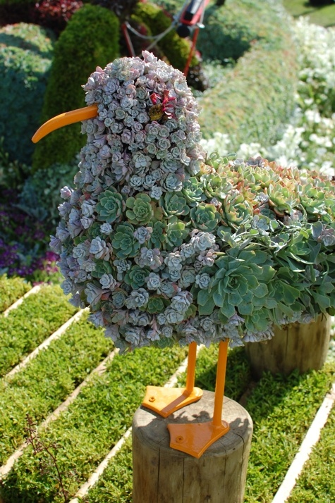 bird made of succulents at RHS Tatton Park Flower Show