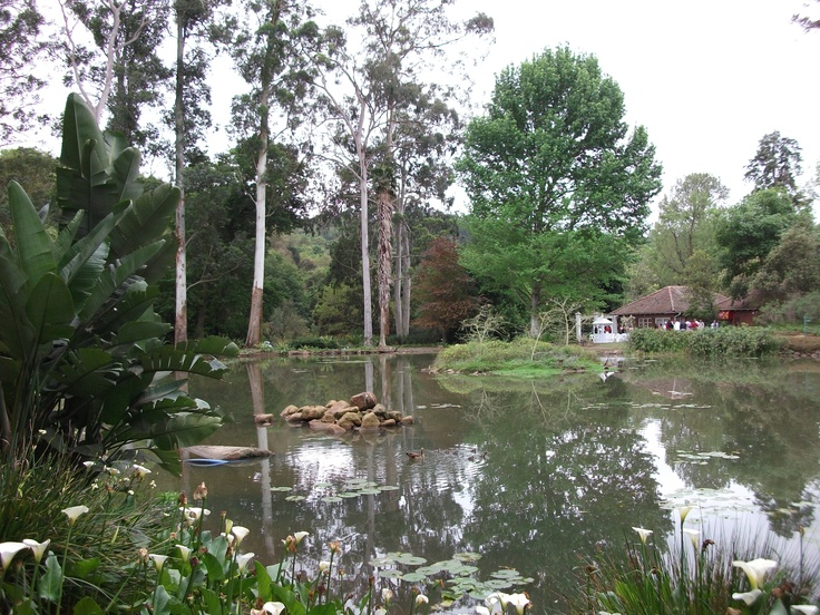 Botanical Gardens in Pietermaritzburg. http://www.n3gateway.com/the-n3-gateway-route/pietermaritzburg-tourism.htm