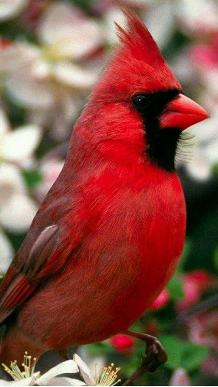 Pin On Favorite Birds