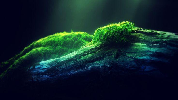 Depth of Field Moss - http://www.fullhdwpp.com/nature/depth-field-moss/
