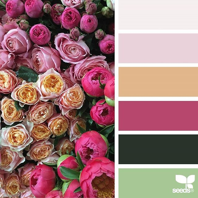 today's inspiration image for {flora palette } is by @fairynuffflowers ... thank you, Steph, for another amazing #SeedsColor image share!