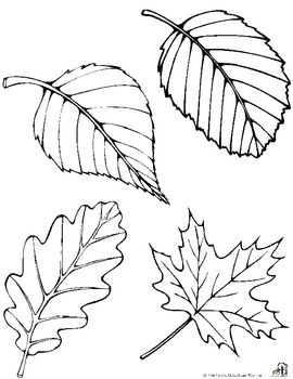 FREE FALL LEAF PATTERNS - TeachersPayTeachers.com