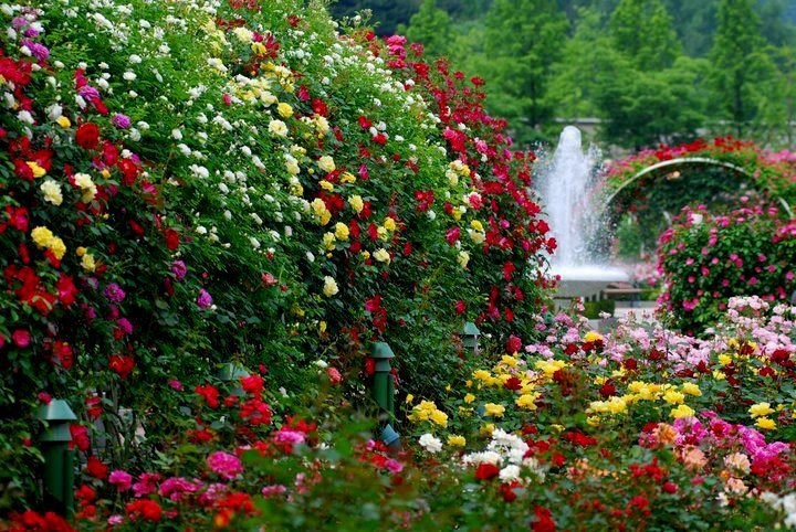 Beautiful Flowers and Fountain Garden