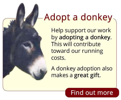 Adopt a donkey at Island Farm Donkey Sanctuary, England.