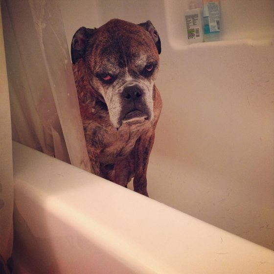 """I don't want a bath."""