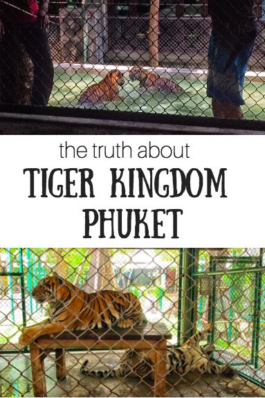 The truth about Tiger Kingdom Phuket - Thailand (South East Asia) by http://wonderluhst.net