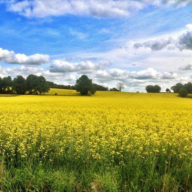 summer in Sweden. Travel photo by @Katya Ledom Presnal