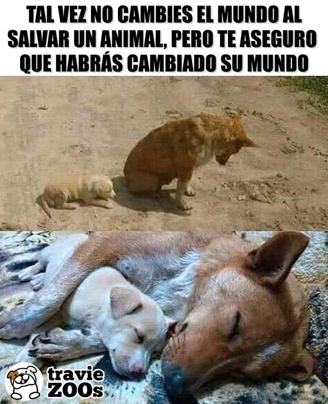Cambia una sola vida y el mundo entero cambiará#perros #dogs #adopta #animales …