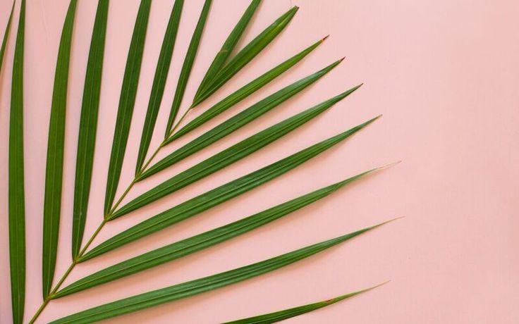 palm love | freebies | desktop wallpapers | tropical.jpg
