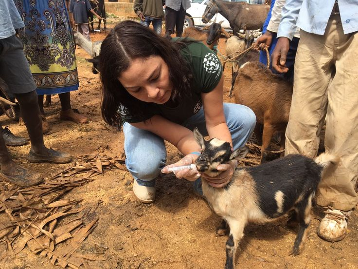 After treating 282 animals on their first visit, HSI sent in a second team last week to help set up an emergency vet clinic to help treat and feed more animals in need.