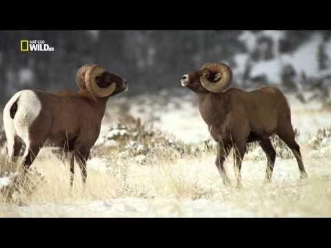 Vad Yellowstone - YouTube