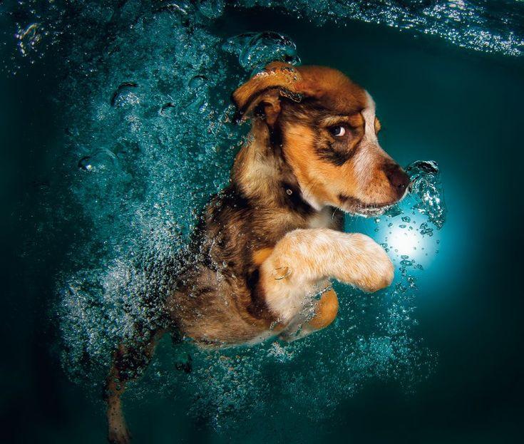 Bordercollie-Mischling Ginger, zwölf Wochen alt. Mehr als tausend junge Hunde fotografierte Casteel, 72 von ihnen schafften es ins Buch.