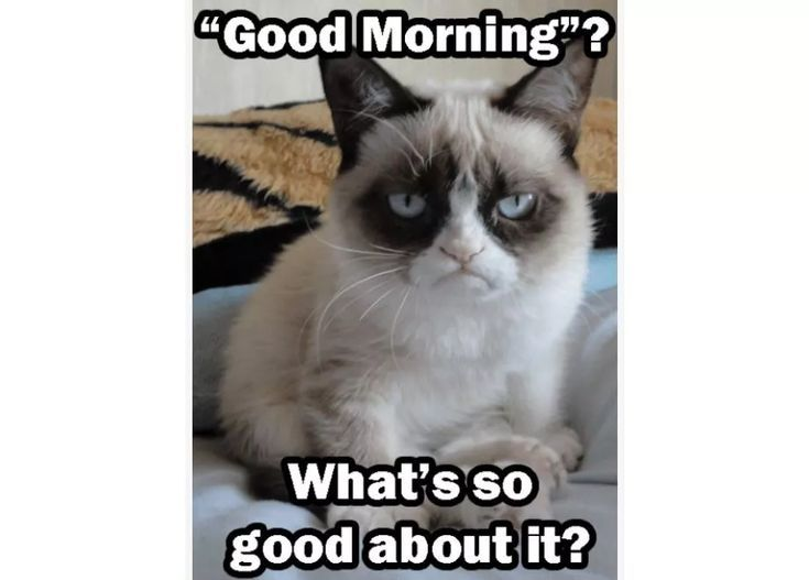 Good Morning Funny Pictures In 2020 Good Morning Funny Pictures Funny Good Morning Memes Morning Memes