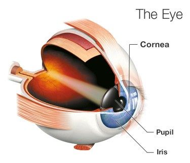 Cornea Transplant: Surgery, Recovery, Success Rate, and More #cornea #transplant, #corneal #transplant, #cornea #transplant #rejection, #cornea #transplant #surgery, #cornea #transplant #success #rate, #cornea #transplant #recovery http://free.nef2.com/cornea-transplant-surgery-recovery-success-rate-and-more-cornea-transplant-corneal-transplant-cornea-transplant-rejection-cornea-transplant-surgery-cornea-transplant-success-rate/  # Cornea Transplant Surgery: What You Need to Know If your…