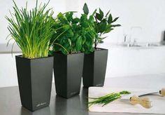 Τα φυτά εσωτερικού χώρου βελτιώνουν την υγεία μας