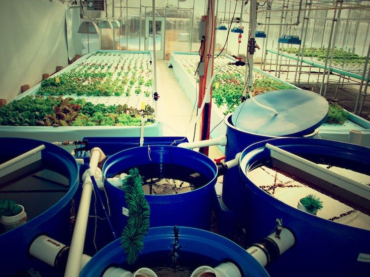 1743 best images about aquaponics on pinterest for Hydroponic raft system design