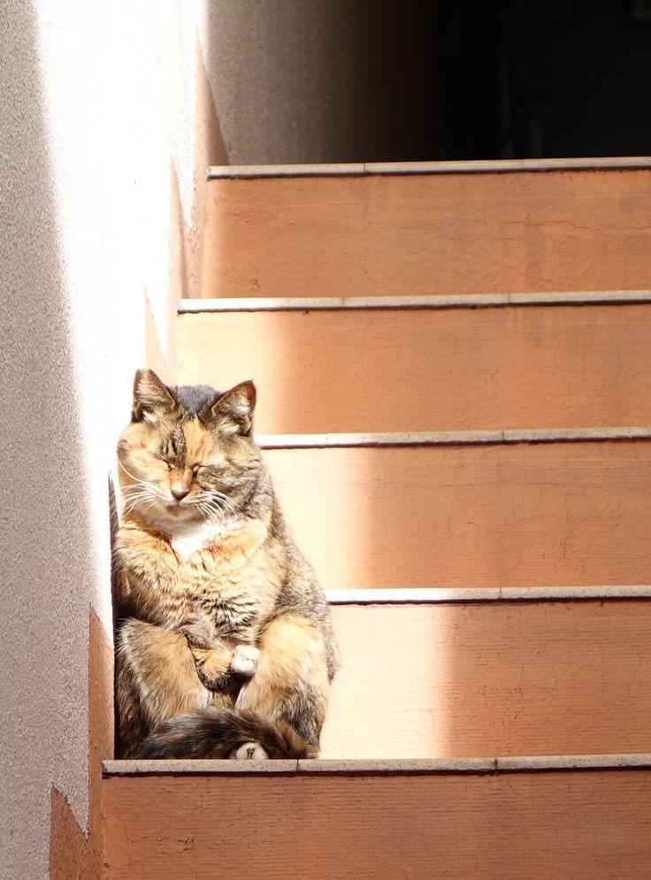 なんか僅かな陽射しを有効活用しようとした結果なのか猫が面白い姿勢で昼寝してた。ぬいぐるみかと思ってた…