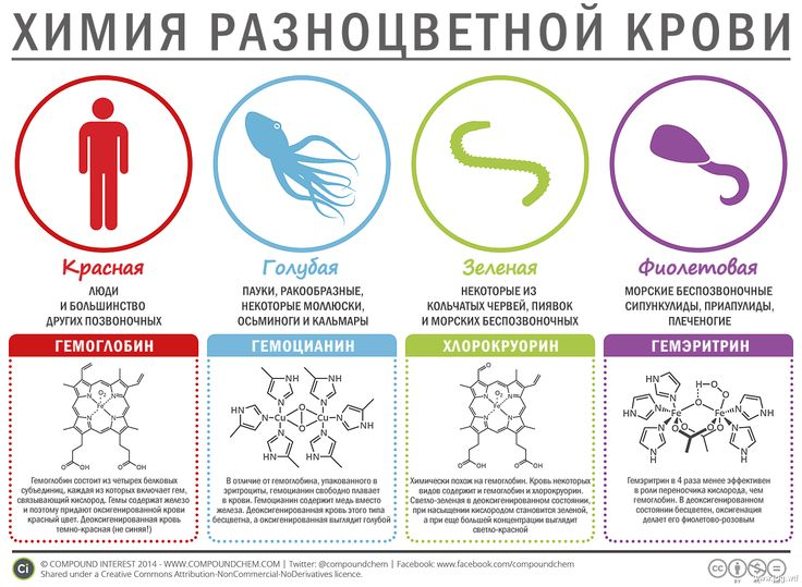 химия разноцветной крови