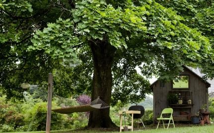 7 Fast Growing Shade Trees to Slash Your Electric Bill