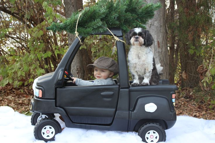Christmas picture cozy coupe truck Heading back from cutting down the tree with my farm dog!