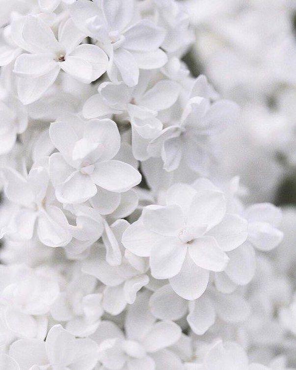 листок, котором красивые картинки в белых тонах простудных заболеваний