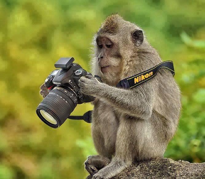 Fotografia , che passione ... - Pagina 5 364af371ed0d8fb666c873ec1eb3145d