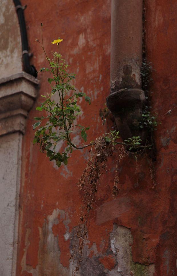 Alle Wege führen nach Roma! Auch unsere Online-Ragazza, Franziska, war dort und hat sich ein paar fabelhafte Tipps notiert...