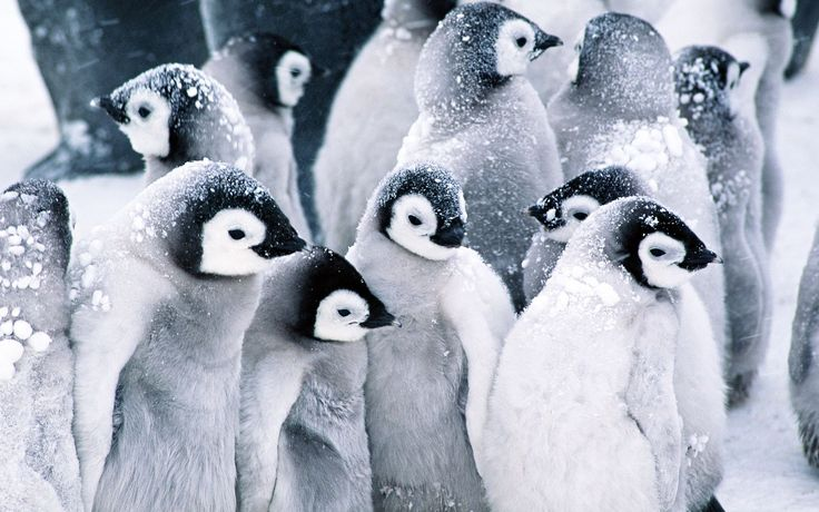 Penguin Wallpapers - Full HD wallpaper search