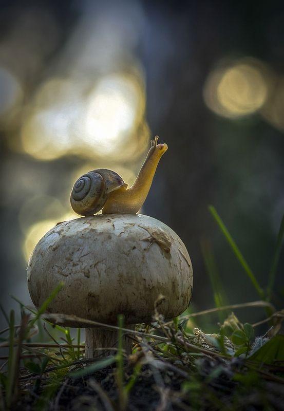 Snail by Anatolich on 35Photo
